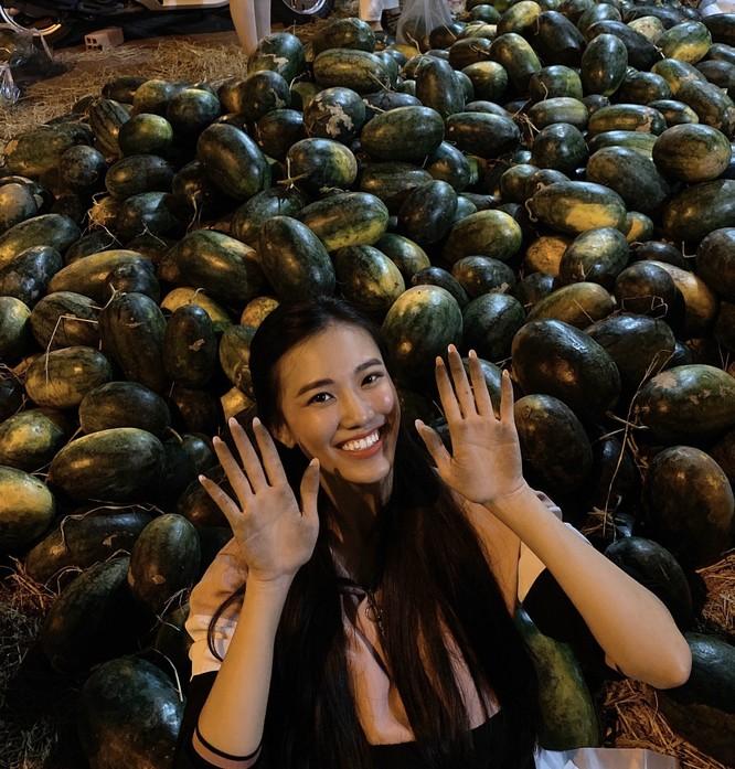 Á hậu Kim Duyên tham gia giải cứu dưa hấu tại Cần Thơ