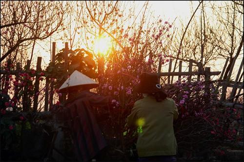 Tháng 1 thăm những làng hoa Tết vào mùa ảnh 1