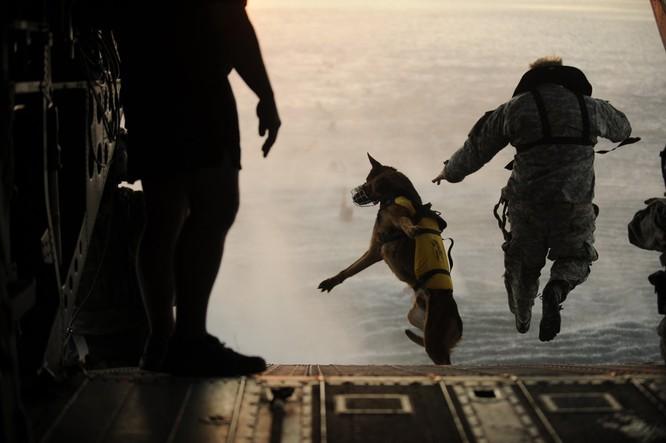 Ở một bài tập, một người lính Mỹ trong một nhóm Lực lượng đặc biệt đã nhảy dù từ một chiếc trực thăng cùng chó nghiệp vụ.