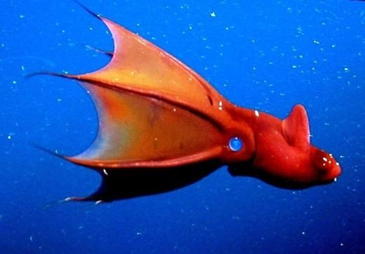 """Kỳ thú """"quái vật"""" dưới lòng đại dương ảnh 2"""