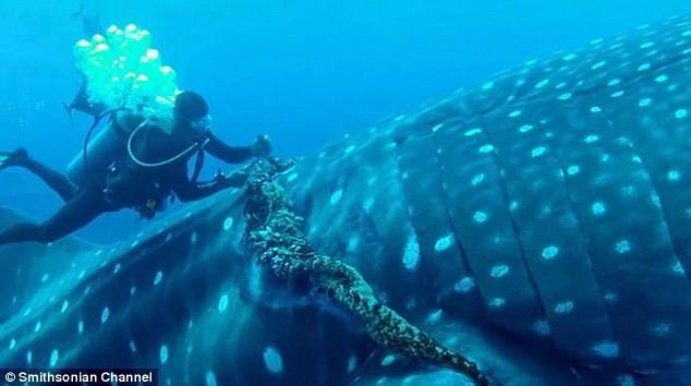 Thót tim xem thợ lặn giải cứu cá mập voi ảnh 2