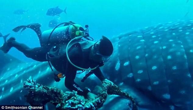 Thót tim xem thợ lặn giải cứu cá mập voi ảnh 3
