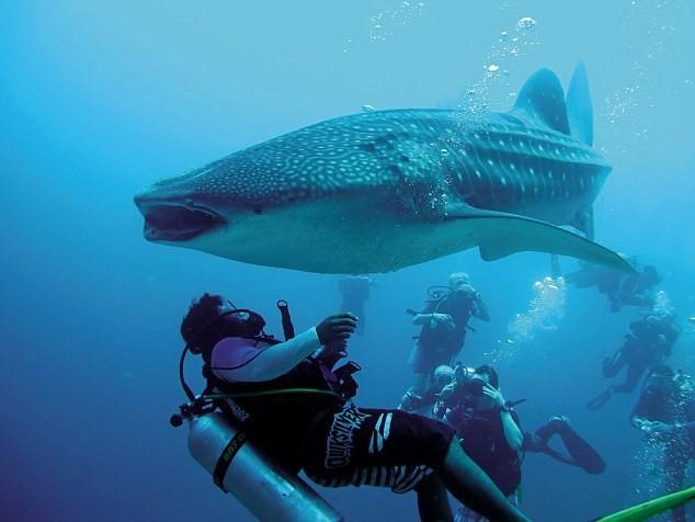 Thót tim xem thợ lặn giải cứu cá mập voi ảnh 4