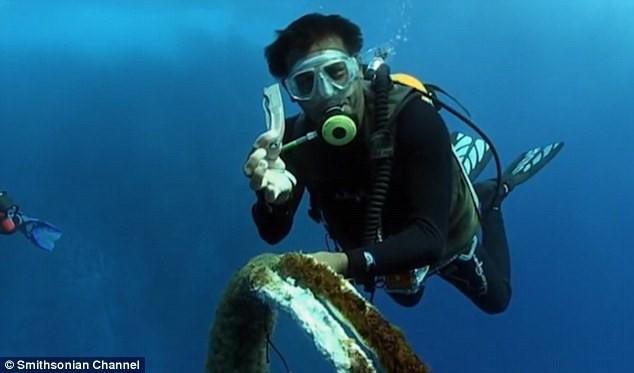 Thót tim xem thợ lặn giải cứu cá mập voi ảnh 5