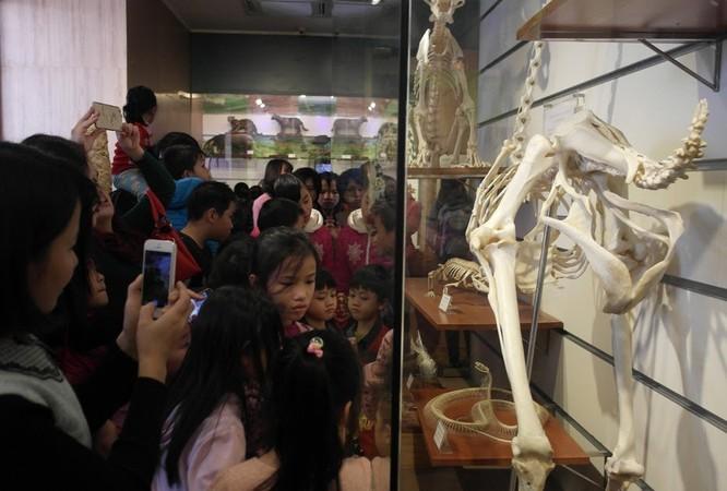 Bảo tàng Thiên nhiên quá tải vì dân đến xem cụ Rùa ảnh 5