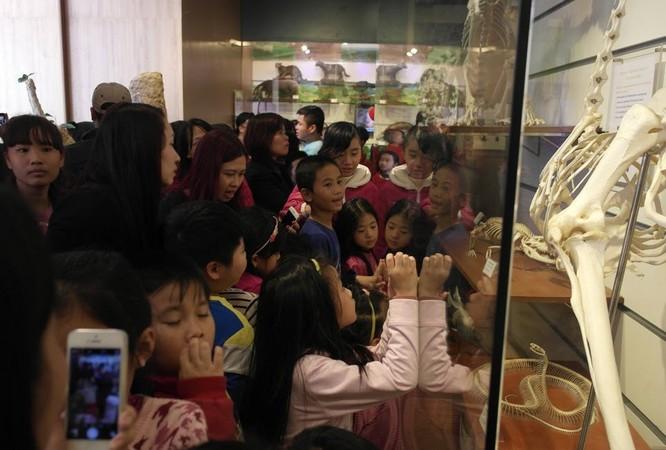 Bảo tàng Thiên nhiên quá tải vì dân đến xem cụ Rùa ảnh 7