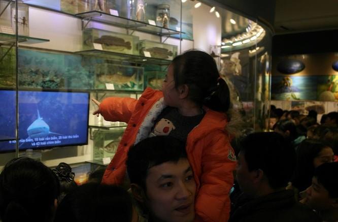 Bảo tàng Thiên nhiên quá tải vì dân đến xem cụ Rùa ảnh 3