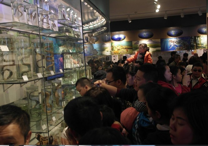Bảo tàng Thiên nhiên quá tải vì dân đến xem cụ Rùa ảnh 8