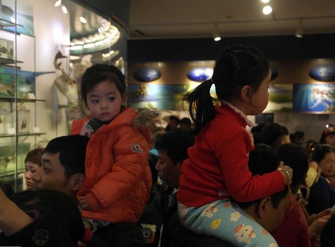 Bảo tàng Thiên nhiên quá tải vì dân đến xem cụ Rùa ảnh 4