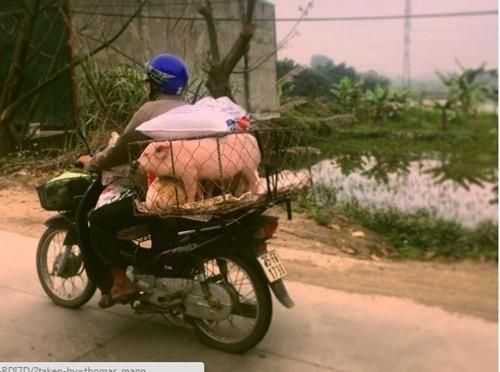 Việt Nam đẹp lạ trong mắt sao Hollywood ảnh 2