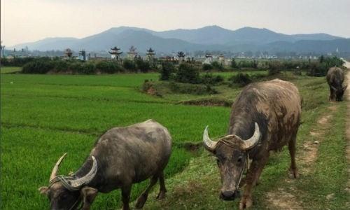 Việt Nam đẹp lạ trong mắt sao Hollywood ảnh 1