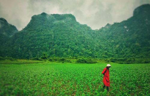 Việt Nam đẹp lạ trong mắt sao Hollywood ảnh 6