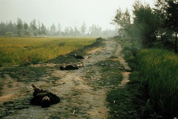 Thảm sát Mỹ Lai: Nỗi ám ảnh suốt nửa thế kỷ ảnh 3