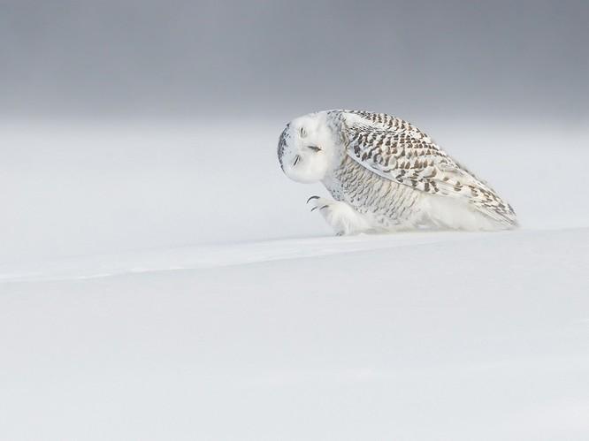 """20 bức ảnh """"có hồn"""" nhất của National Geographic ảnh 11"""