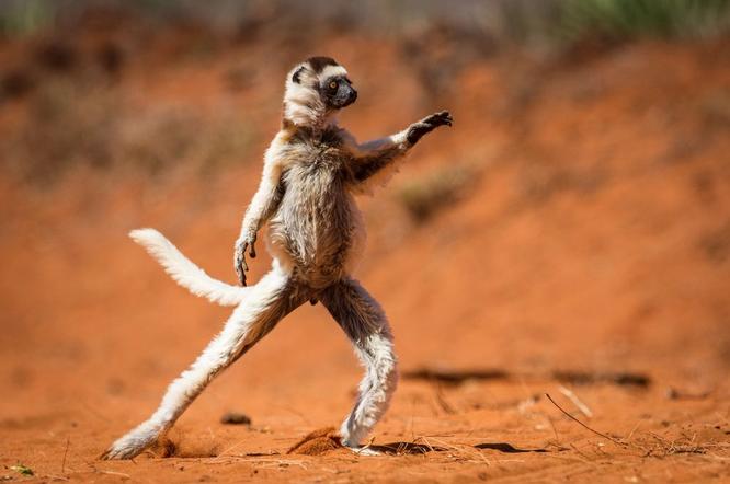 """20 bức ảnh """"có hồn"""" nhất của National Geographic ảnh 13"""