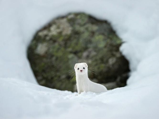 """20 bức ảnh """"có hồn"""" nhất của National Geographic ảnh 14"""