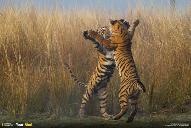 """20 bức ảnh """"có hồn"""" nhất của National Geographic ảnh 17"""