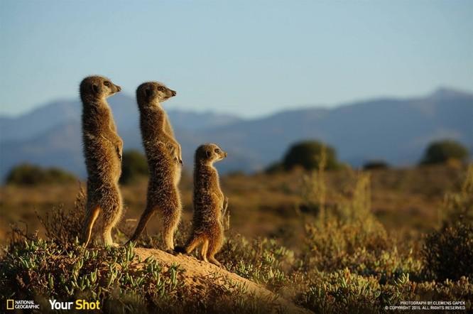 """20 bức ảnh """"có hồn"""" nhất của National Geographic ảnh 3"""