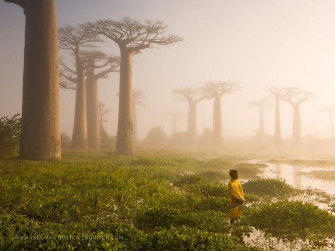 """20 bức ảnh """"có hồn"""" nhất của National Geographic ảnh 8"""