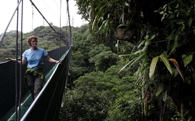10 khu rừng kỳ lạ nhất thế giới ảnh 9