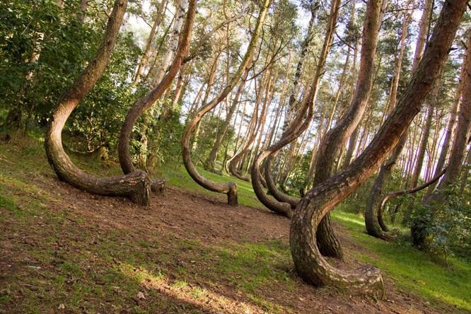 10 khu rừng kỳ lạ nhất thế giới ảnh 2