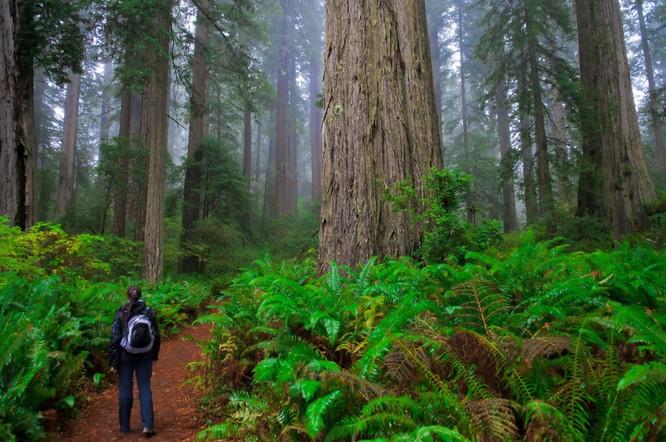 10 khu rừng kỳ lạ nhất thế giới ảnh 3