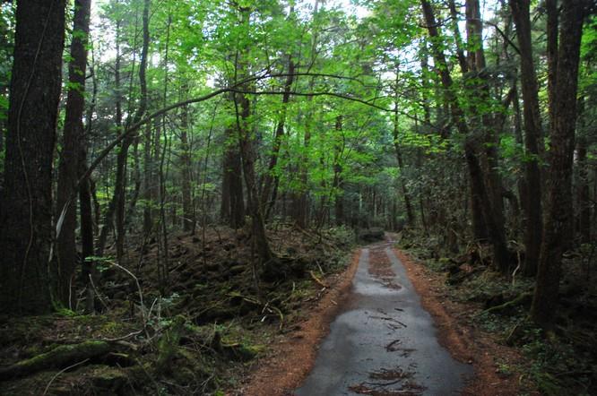 10 khu rừng kỳ lạ nhất thế giới ảnh 5