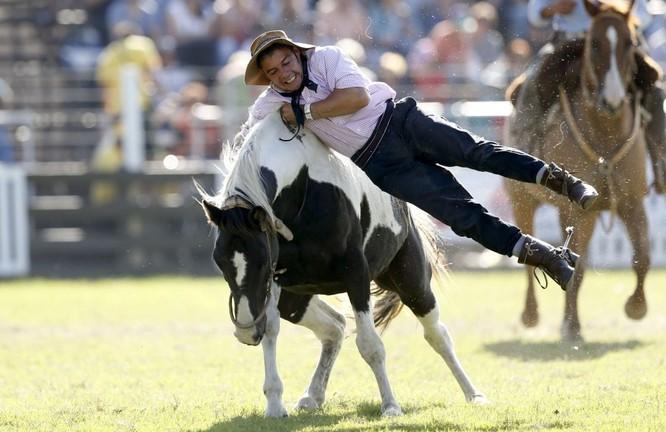 Người dự rodeo hàng năm tại Montevideo, Uruguay