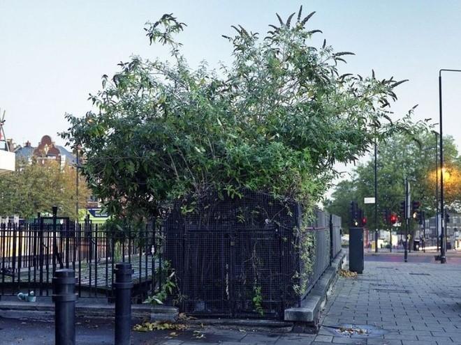 Nhà vệ sinh công cộng thời Victoria ở London ảnh 4