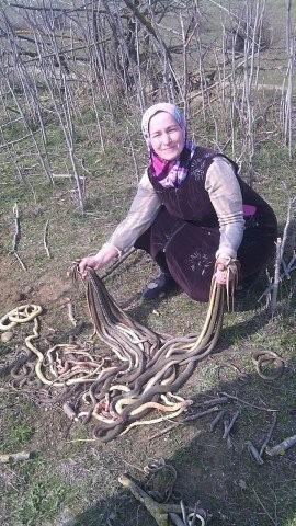 Cụ Sahib Islammagomedova, 60 tuổi.