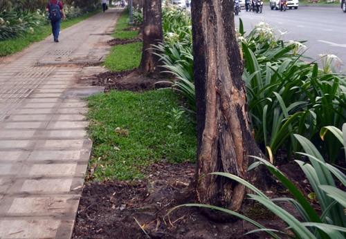 Nghi vấn: Cây xanh ở Sài Gòn bị đầu độc để lấy không gian cho bảng quảng cáo ảnh 1