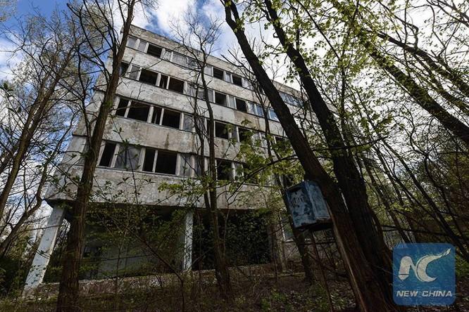 8 điều có thể bạn không biết về Chernobyl ảnh 12