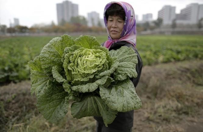 Triều Tiên: Sự khác biệt giữa cuộc sống ở Bình Nhưỡng và vùng nông thôn ảnh 11
