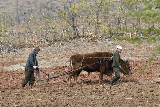 Triều Tiên: Sự khác biệt giữa cuộc sống ở Bình Nhưỡng và vùng nông thôn ảnh 3