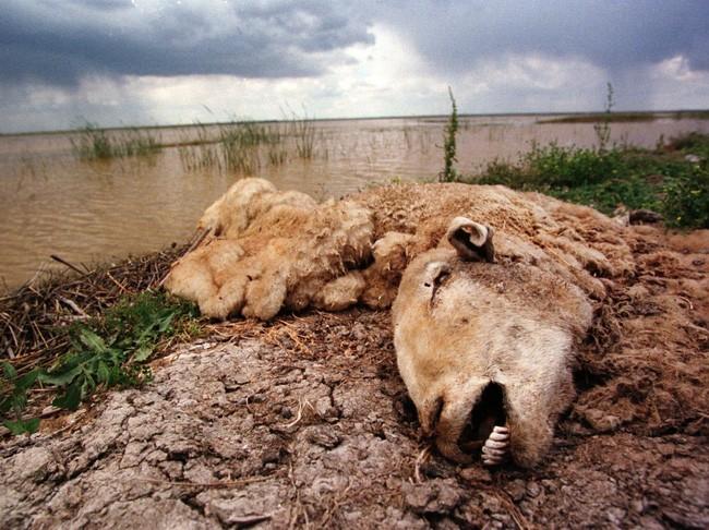20 bức ảnh gây sốc về nguồn nước ô nhiễm trầm trọng ảnh 6