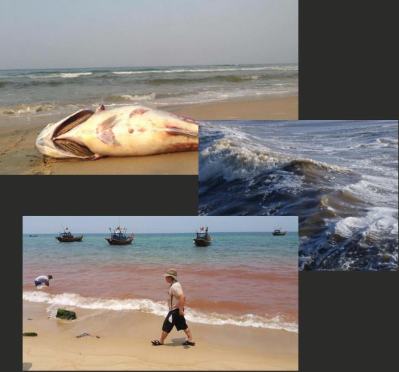 Video: Nhìn lại 84 ngày truy tìm nguyên nhân thảm họa cá chết ảnh 4