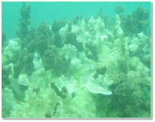 Bộ ảnh đáy biển miền Trung sau sự cố môi trường ảnh 11
