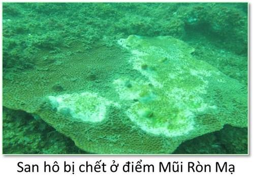 Bộ ảnh đáy biển miền Trung sau sự cố môi trường ảnh 1