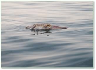 Bộ ảnh đáy biển miền Trung sau sự cố môi trường ảnh 16