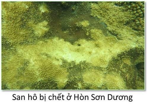 Bộ ảnh đáy biển miền Trung sau sự cố môi trường ảnh 2
