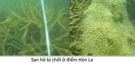 Bộ ảnh đáy biển miền Trung sau sự cố môi trường ảnh 4