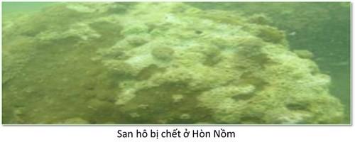 Bộ ảnh đáy biển miền Trung sau sự cố môi trường ảnh 5
