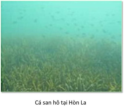 Bộ ảnh đáy biển miền Trung sau sự cố môi trường ảnh 6