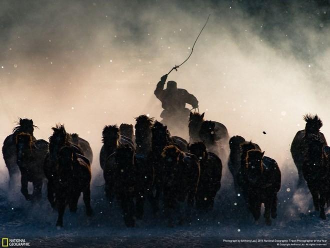 Ấn tượng những bức ảnh đoạt giải National Geographic 2016 ảnh 1