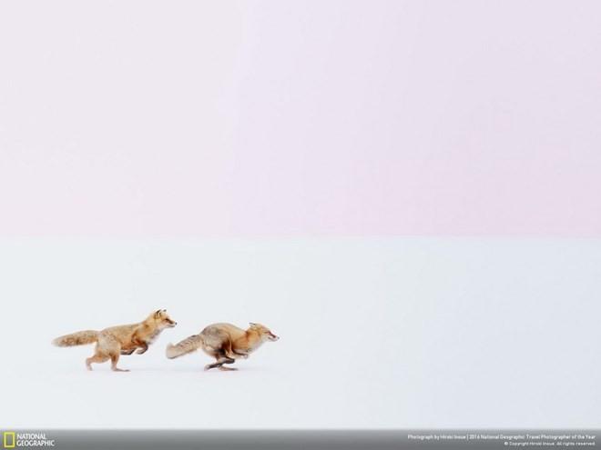 Ấn tượng những bức ảnh đoạt giải National Geographic 2016 ảnh 4