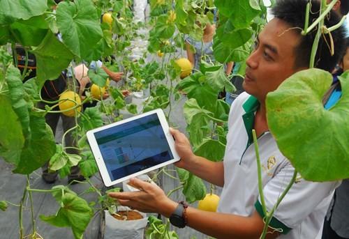 Sử dụng công nghệ SmartAgri trong trồng dưa lưới tại Khu nông nghiệp công nghệ cao TP Hồ Chí Minh.