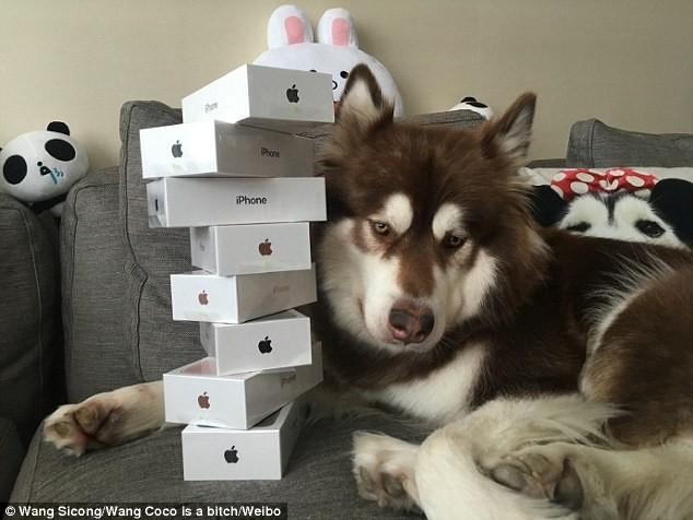 Mua liền 8 chiếc iPhone 7 tặng...chó cưng ảnh 1