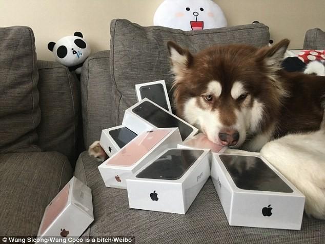 Mua liền 8 chiếc iPhone 7 tặng...chó cưng ảnh 2