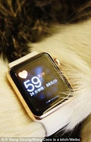 Mua liền 8 chiếc iPhone 7 tặng...chó cưng ảnh 4