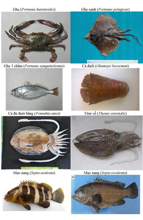 Điểm danh 154 loại hải sản miền Trung chưa được ăn ảnh 17